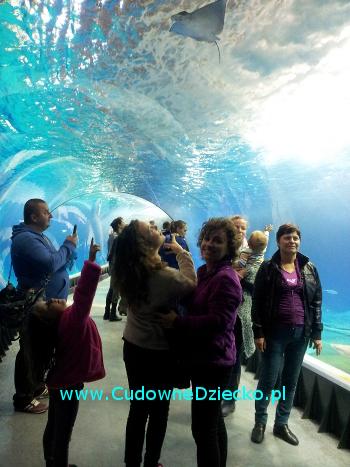 afrykarium-wroclaw-zoo