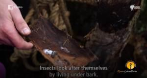 dunskie-lesne-przedszkole-nauka-przyrody