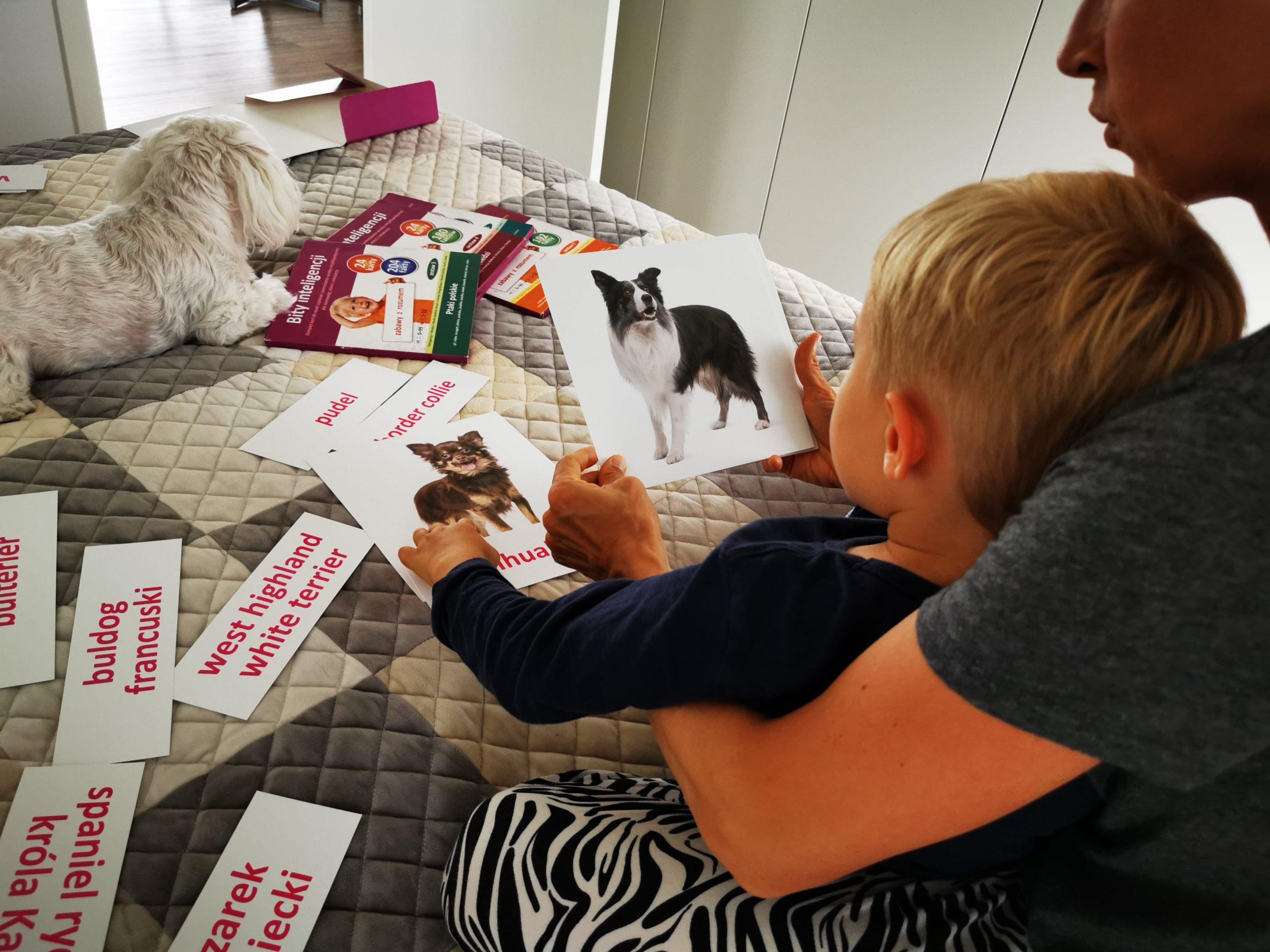 jak nauczyć dziecko czytać zabawy zkartami bity inteligencji przedszkolak mama ipies