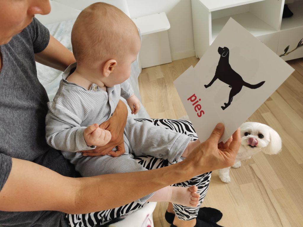 kontrastowe karty dostymulacji wzroku tropy sylwetki zwierząt pies