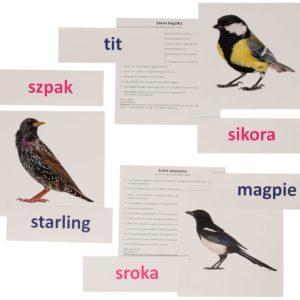 bity inteligencji ptaki miejskie metoda Domana dr Czerska