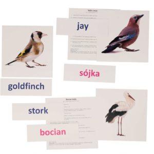 bity inteligencji ptaki polskie europejskie metoda Domana drCzerska