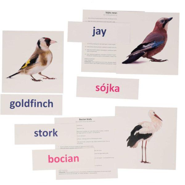 bity inteligencji ptaki polskie europejskie metoda Domana dr Czerska