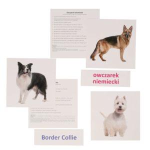 bity inteligencji psy rasowe metoda Domana dr Czerska