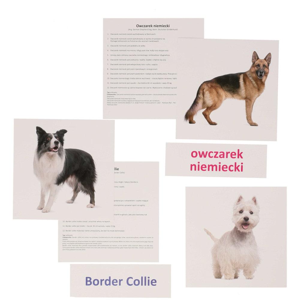 bity inteligencji psy rasowe metoda Domana drCzerska