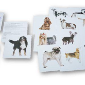 bity inteligencji 7 Psy rasowe 2