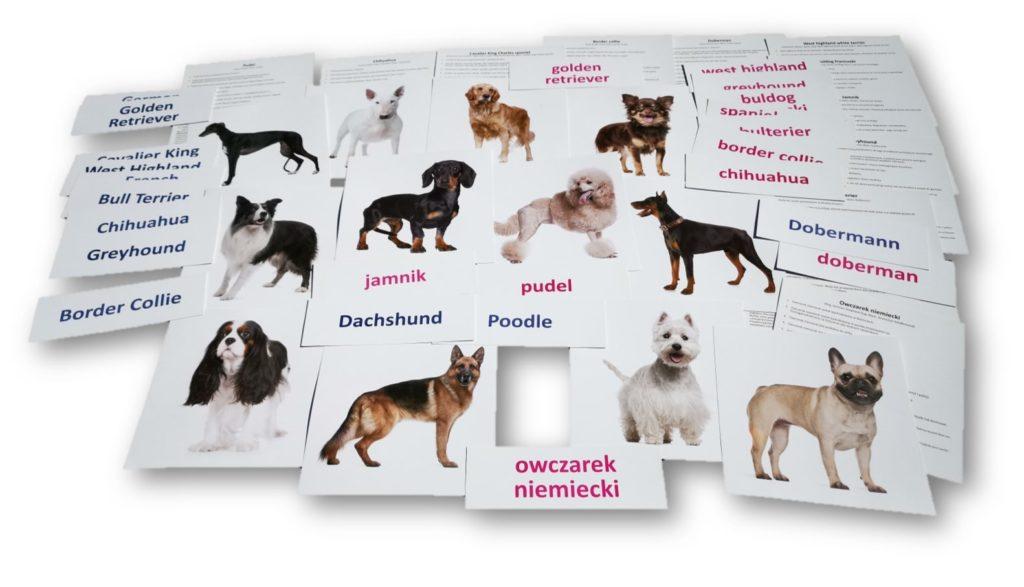 bity inteligencji zestaw 6 psy rasowe drCzerska